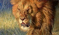 African King by Tony Forrest -  sized 40x24 inches. Available from Whitewall Galleries